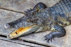 Голова азиатских крокодилов Стоковое Изображение