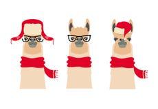Голова лама вектора установила в зиму, одежду рождества и стекла Стоковая Фотография RF