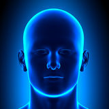 Голова анатомии - вид спереди - голубая концепция иллюстрация штока