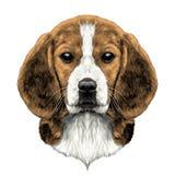 Голова бигля собаки иллюстрация вектора