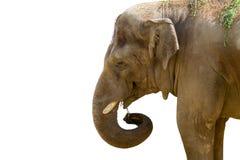 Голова большого животного слона в зоопарке Стоковое Фото