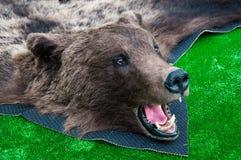 Голова бурого медведя Стоковое фото RF