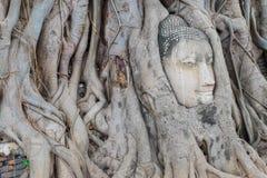 Голова Будда в дереве укореняет, на виске Wat Mahathat, Ayutthaya Стоковая Фотография RF