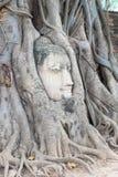 Голова Будда в дереве укореняет, на виске Wat Mahathat, Ayutthaya Стоковая Фотография