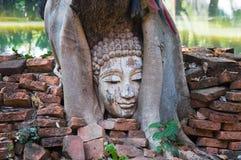 Голова Будды в баньяне в археологических раскопках северном Таиланде Стоковое Изображение