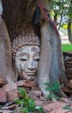 Голова Будды в баньяне в археологических раскопках северном Таиланде Стоковые Фото