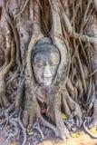 Голова Будды в баньяне, Wat Mahathat, Ayutthaya, Таиланде Стоковое фото RF