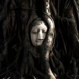 Голова Будды в дереве на Wat Mahathat, Ayutthaya, Таиланде стоковые изображения rf