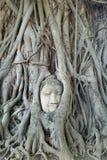 Голова Будды в корне дерева на ayutthaya Стоковые Фото