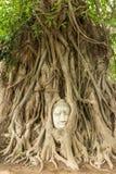 Голова Будды в корне дерева Bo (всемирное наследие ЮНЕСКО) Стоковые Изображения