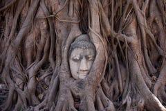 Голова Будды в корнях дерева Стоковое фото RF
