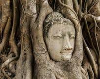 Голова Будды в старом дереве стоковое фото