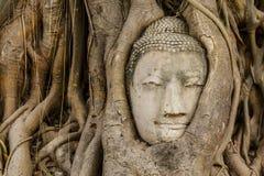 Голова Будды в старом конце дерева вверх стоковая фотография rf