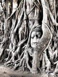 Голова Будды в Ayutthaya Стоковая Фотография RF