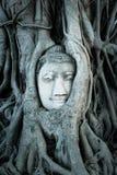 Голова Будды предусматриванная корнями дерева в Ayutthaya Стоковая Фотография