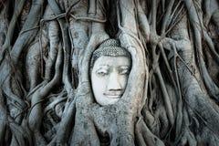 Голова Будды предусматриванная корнями дерева в Ayutthaya Стоковые Изображения