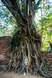 Голова Будды предусматриванная корнями дерева на провинции Ayutthaya в Таиланде Стоковое Изображение RF