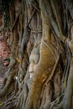 Голова Будды предусматриванная корнями дерева на провинции Ayutthaya в Таиланде Стоковые Изображения