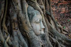 Голова Будды предусматриванная корнями дерева на провинции Ayutthaya в Таиланде Стоковые Фото