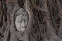 Голова Будды Стоковые Фотографии RF