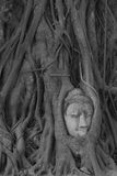 Голова Будды Стоковое фото RF