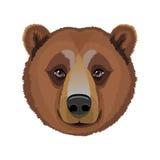 Голова взрослого бурого медведя Стоковая Фотография RF