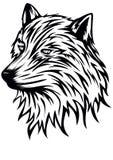 Голова волка Стоковые Изображения