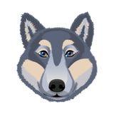 Голова волка Стоковая Фотография RF