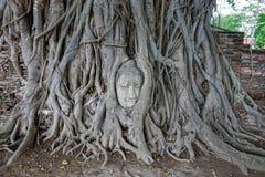 Голова в корнях дерева, Wat Mahathat Будды, Ayuttaya Таиланд Отключение островов PhiPhi и Krabi Таиланд Стоковая Фотография RF