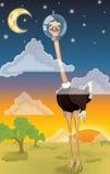 Голова в страусе облаков Стоковое фото RF
