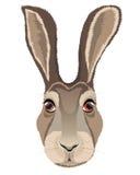 Голова зайца Стоковые Изображения