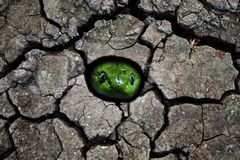 Голова зеленой змейки в отверстии Стоковая Фотография