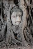 Голова изображения Будды в дереве на мамах Ha Wat которые висок, Ayutthaya, Таиланд стоковые изображения rf