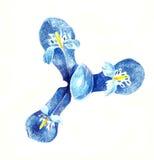 Голова карандаша графическая голубой радужки сверху Стоковые Фото
