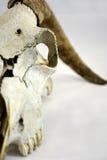 Голова козы Стоковое Фото