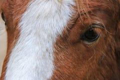 Голова коровы, парк осени Стоковая Фотография