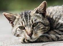 Голова кота Стоковое фото RF