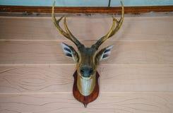 Голова мертвого оленя на стене Стоковые Изображения
