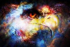 Голова орла в космическом космосе Животная концепция детеныши профиля портрета предпосылки изолированные парами белые Стоковое Фото