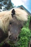 Голова лошади конца-вверх вытаращить в камере Стоковое Изображение RF