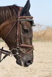Голова лошади на открытом воздухе с предпосылкой голубого неба и желтой травы Стоковая Фотография