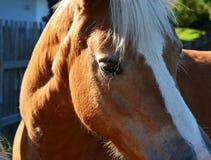 Голова лошади Стоковое Фото