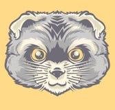 Голова персидского кота Стоковое Изображение RF