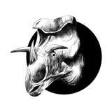 Голова породы динозавра трицератопс стоковое изображение rf