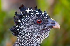 Голова птицы стоковые фотографии rf