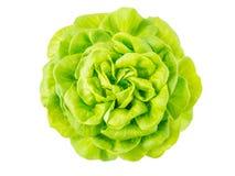 Голова розетки салата салата Стоковые Фото