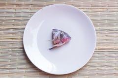 Голова рыбы Стоковое Изображение