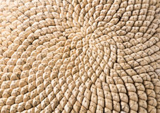 Голова семян подсолнуха Стоковое фото RF