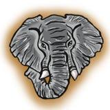 Голова серого цвета африканского слона Стоковое Фото