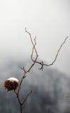 Голова снега Стоковое фото RF